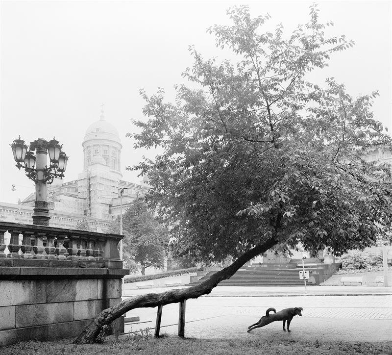 Drömskt foto med hund och trappa. Fotograf: Pentti Sammalahti